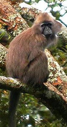 091111-kipunji-monkey-vmed-142p.widec