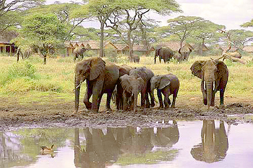 Now at one of my favorite Serengeti lodges, Ndutu.