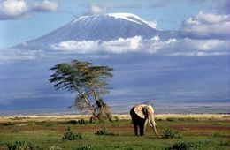 Kilimanjoro - Africa's Crowning Glory