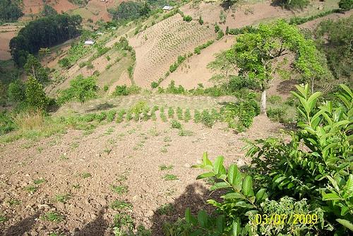 Degraded Hillside in Uganda