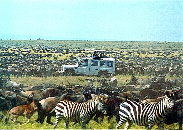 Serengeti's southern grassland plains.