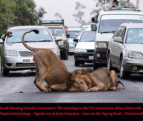 LIONS ON NAIROBI ROAD