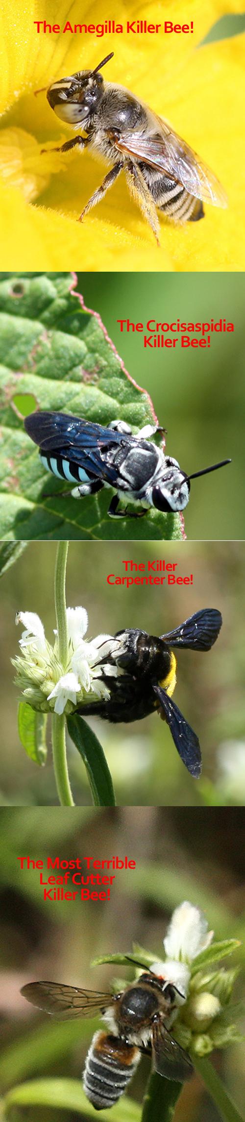 beautifulbees