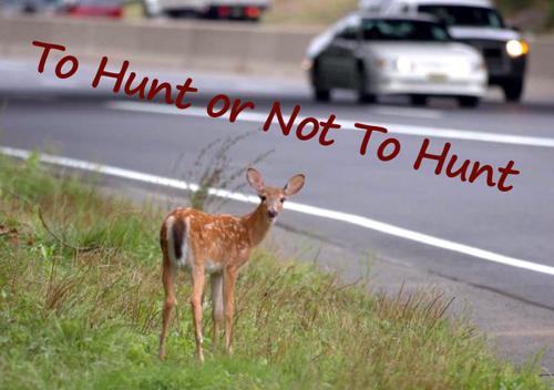 HuntOrNot