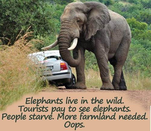 elephant-attacks-car