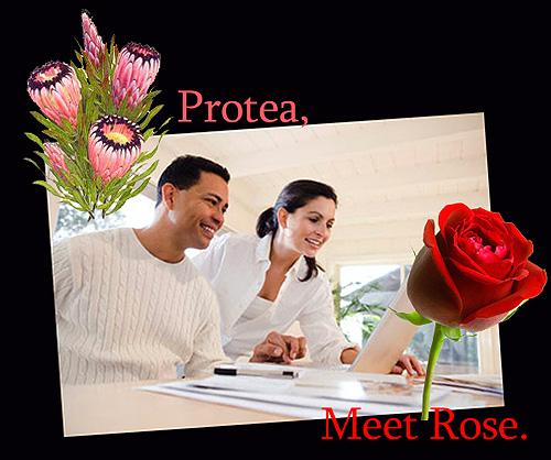 ProteaMeetRose