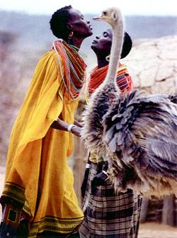 dancers_ostrich.samburu