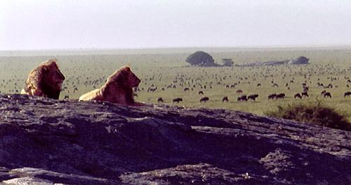 lionpanoclipped
