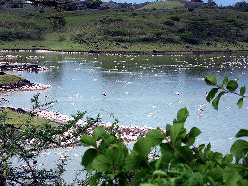 Thousands of flamingoes in the Momela Lakes.