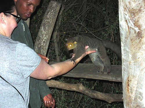 Debbie Weingarden with the camp's bushbaby.