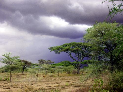 RainsReturn