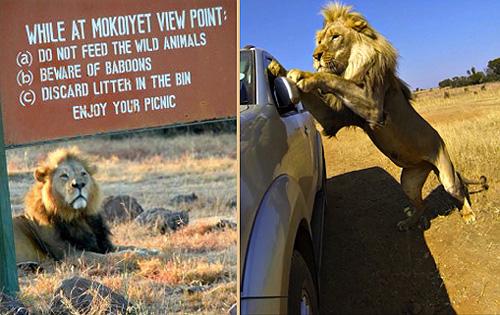lion under sign NNP