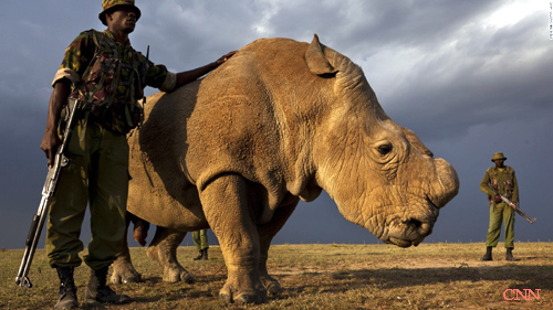 rhinoandguards