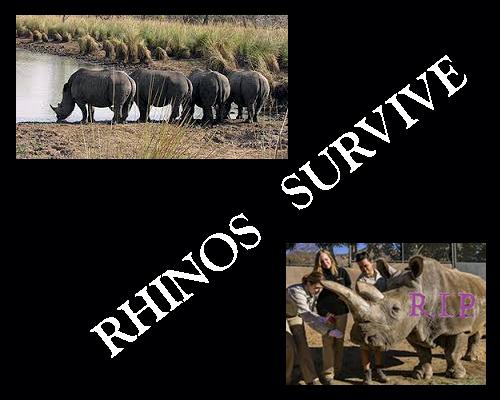 rhinossurvive