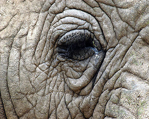 Elephant eye by Bill Banzhaf.