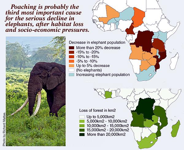 elephantgraphs