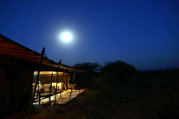 last night in serengeti.897.mmcall