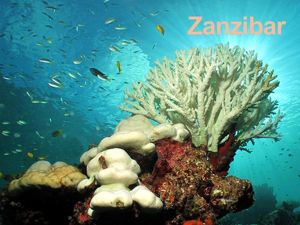 zanzibar reef