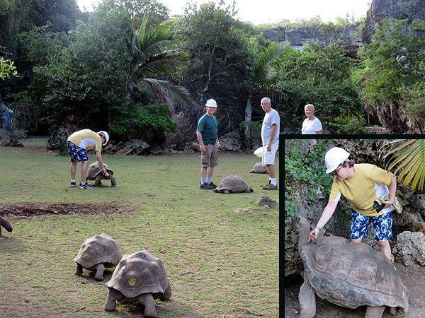 tortoises.899