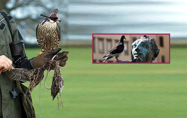falconpestcontrol