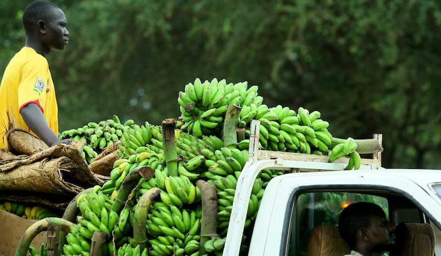 **FILE** A young African Sudanese man seen riding a truck carrying bananas in Juba, the capital of the Republic of South Sudan. South Sudan became an independent state on July 09, 2011, and soon thereafter also a United Nations member state. South Sudan is one of the poorest countries in the world. August 20, 2011. Photo by Moshe Shai/FLASH90 **MAARIV OUT**